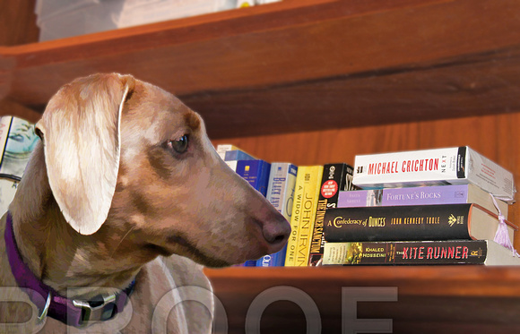 bookcase and doxie