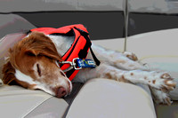 boat 4084 dog tired