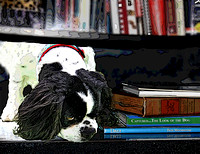 books and cavalier