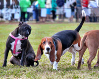 Friends of the Vero Beach Dog Park Grand Opening