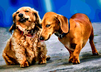 doxies feb 235 tpz pstr