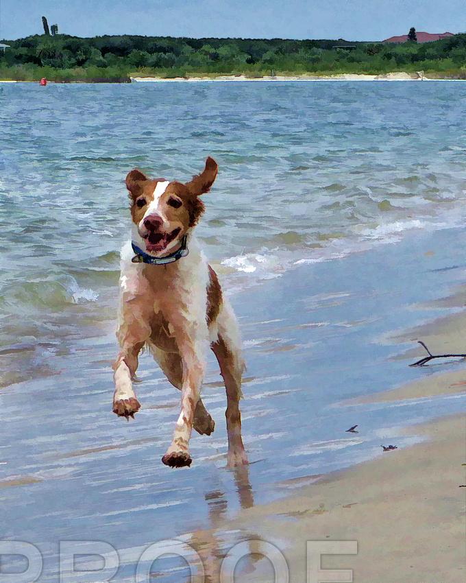 Sonny at beach 0228 ol