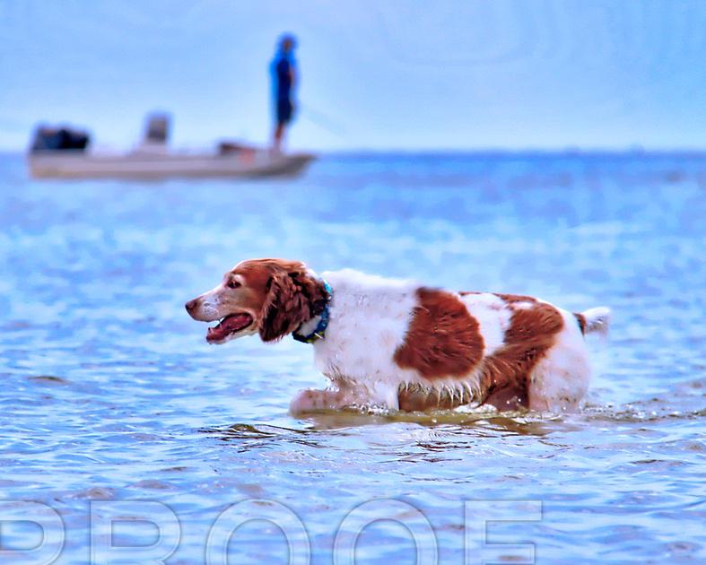 beach tpz 3669 swimming