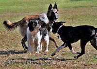 "dogs, ""dogs playing"", ""dog park"""