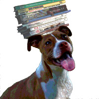 books on dogs head stlzd