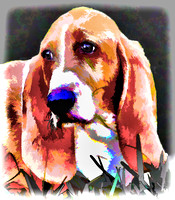 Basset Farm Dog