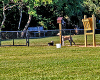 GO large area and small dog park vb 5243